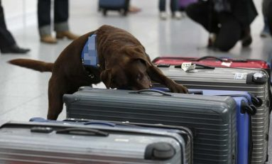 Cão farejador descobre droga em aeroporto e suspeito é preso