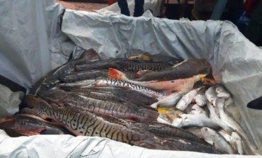Quase 700 kg de peixes são apreendidos pela Polícia Ambiental