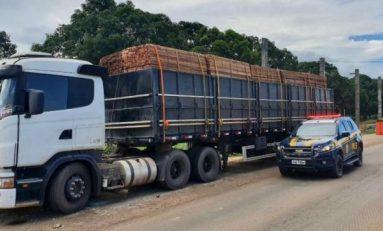 PRF realiza flagrante de transporte ilegal de madeira em cidade de RO