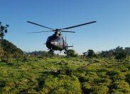 Segunda fase da Operação Verde Brasil 2 é desencadeada na Ponta do Abunã