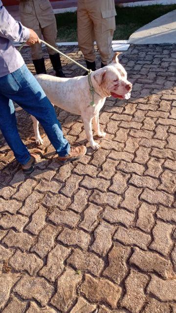 Cachorro é encontrado e deixado no quartel dos Bombeiros