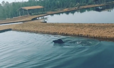 VÍDEO: Anta invade piscina de balneário para se refrescar em Cabixi
