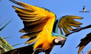Cabixi: Turismo de Contemplação pode movimentar interior de Rondônia