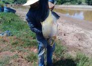 Governo de RO aprova isenção da cobrança de ICMS na comercialização do peixe tambatinga no Estado