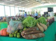 Mais de mil produtores da agricultura familiar de Rondônia atenderão o PAA Federal na aquisição de alimentos