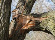 Esmagados: queda de árvores causa morte de três trabalhadores em distritos de Porto Velho