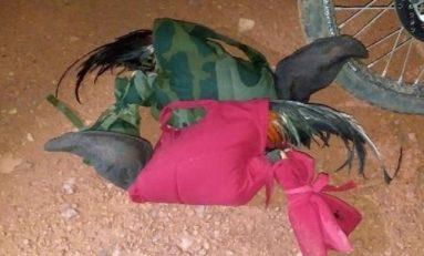 Polícia Militar prende homem suspeito de promover Briga de Galos
