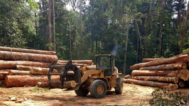 Amazônia tem desmatamento recorde em outubro