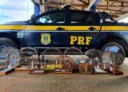 Em Rondônia, PRF intensifica o combate a crimes ambientais