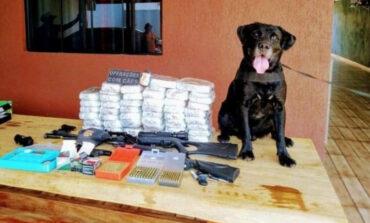 Após mais de 8 anos na Polícia Militar, 'cão Cyborg' se aposenta em Porto Velho