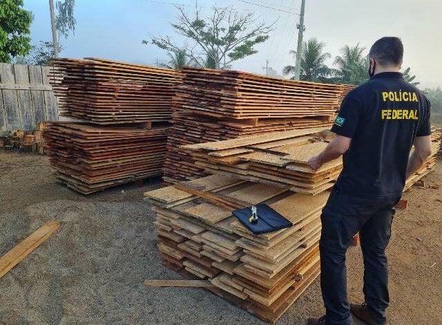 FLORESTA S/A II: PF deflagra operação contra madeireiras que atuavam em unidades de Conservação Federal